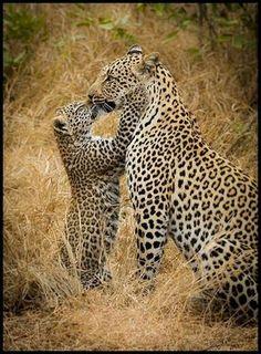 @mainzina @carvalheucilene @puscatelle@TheGrizzleGrams @LO2BSH @Crispi66 @AdamsFantasy Ty ami, beautiful kittens hehe