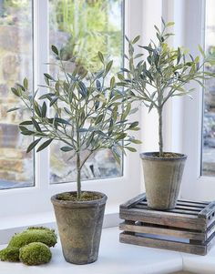 Our range of faux flowers, faux plants, fake plants, artificial house plants uk, large artificial plants and faux flora makes it easy to create displays that last. Indoor Olive Tree, Potted Olive Tree, Olive Plant, Faux Olive Tree, Indoor Trees, Potted Trees, Indoor Plants, Fake Plants Decor, Faux Plants