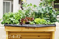 Potted Plants, Cabbage, Planters, Vegetables, Garden, Pot Plants, Garten, Lawn And Garden, Veggie Food