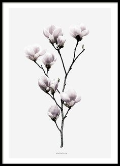 Pósters y print botánicos | Cuadros y print de plantas y flores | Desenio.es