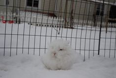 The Most Squeedorable Snowball Ever