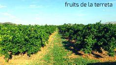 Desbrozando el campo de naranjas ecológicas