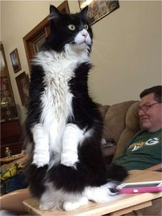 Especially when they think they're a watchdog.   54 Pictures That Will Make You Want A Black-And-White Cat Immediately