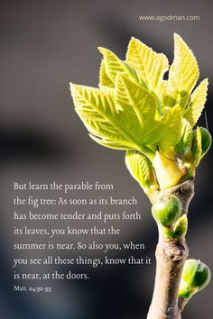 But learn the parable from the fig tree: As soon as its branch has become tender and puts forth its leaves, you know that the summer is near. So also you, when you see all these things, know that it is near, at the doors. Matt. 24:32-33
