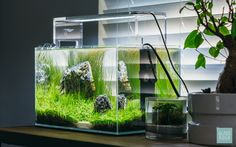 Need inspiration for a nano planted fish tank? Glass Aqua is the perfect place to find the look you want for your planted aquarium, aquatic plants, and more! Aquarium Lamp, Mini Aquarium, Nature Aquarium, Home Aquarium, Aquarium Fish Tank, Planted Aquarium, Aquarium Ideas, Fish Tank Design, Indoor Aquaponics