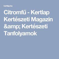Citromfű - Kertlap Kertészeti Magazin & Kertészeti Tanfolyamok