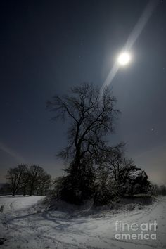 ✯ Moonlight and the Snow