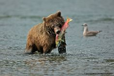start planning your  Alaska fishing trip  don't forget the pepper spray