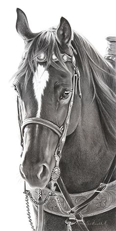 """Fisher's Pick by Mary Ross Buchholz Graphite & Charcoal ~ 18.5"""" x 9"""""""