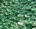 I love this weblink.  Directory of Groundcovers - Groundcovers to Know and Use