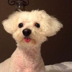 My Dog Fred!