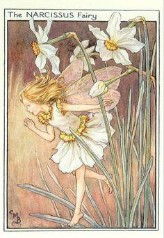 Narcissus Flower Fairies