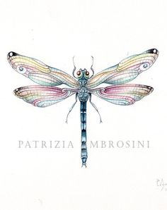 9x7 Watercolour Dragonfly No5 By Happyapplebumblebee On Etsy