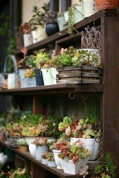 jardines miniatura 17