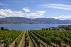 10 of the best wineries to visit in Canada
