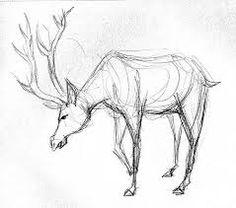 Image result for Deer drawings