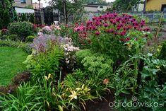 Ogrodowa przygoda Łukasza :) - strona 659 - Forum ogrodnicze - Ogrodowisko