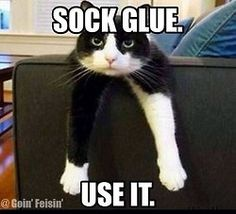 Picture # 18 collection funny animal quotes pics) for June 2016 – Funny Pictures, Quotes, Pics, Photos, Images and Very Cute animals. Funny Animal Memes, Cute Funny Animals, Funny Animal Pictures, Funny Cute, Cute Cats, Hilarious, Animal Jokes, Funny Memes, Funny Pics