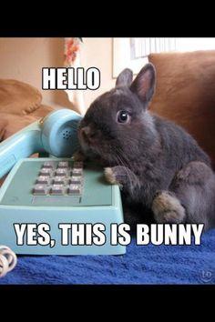 Funny Bunny gallery (11 photos) – Daily Pets Life