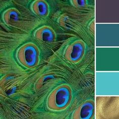Pantone's Colour of 2013 Exotic Emerald Green could be quite beautiful in a peacock themed colour palette. Paired with a rich purple, bold blues and stunning gold accents this Emerald Green colour scheme Peacock Color Scheme, Green Color Schemes, Green Colour Palette, Peacock Colors, Green Colors, Peacock Feathers, Gold Colour, Peacock Blue, Emerald Colour