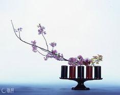 可憐ではかなげな桜を引き立たせたくて、端正な表情の漆器を使いました。口元に趣の異なる蘭をいけることで、リズミカルな印象になりました。花材:桜、パフィオペディルム、胡蝶蘭 花器:漆器花器 Fine lacquer ware is used to emphasize lovely delicate flowering cherry. Adding different taste of moth orchid at the base, rhythmical impression is given. Material:Flowering cherry, Lady's-slipper, Moth orchid Container:Lacquer vase  #ikebana #sogetsu