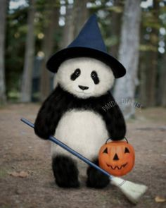Pin by Farhat Fatima on Panda Love❤ Cute Baby Animals, Animals And Pets, Funny Animals, Fox Terriers, Funny Animal Pictures, Cute Pictures, Photo Panda, Panda Lindo, Baby Panda Bears