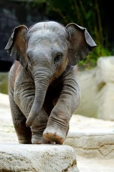 A Jason le encanta elefantes.                                                                                                                                                                                 Más