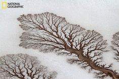 Aerial photograph by Adrian Franco was selected as National Geographic's Picture of the Day for April In it we see the incredible fractal patterns rivers (now dried out) have made as they spread into the salt flats of the Baja California Desert in Mexico. Baja California, Fractal Patterns, Patterns In Nature, Tree Patterns, Art Quotidien, Fractals In Nature, Rivers In The Desert, Desert Trees, Dry Desert
