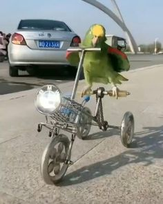 #parrot #bird #funny Cute Little Animals, Cute Funny Animals, Cute Cats, Parrot Pet, Parrot Bird, Funny Birds, Cute Birds, Funny Animal Memes, Funny Animal Pictures