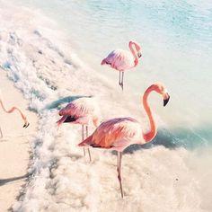 Beachy flamingoes. Pinterest: pearlxoxoxo