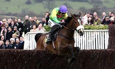 Kauto Star -Winnings: 41 Starts: 23 - 7 - 4, £2,375,883  What a Loss to Racing and Dressage