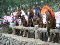 Horses in Baguio City