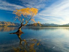 Lake Wanaka, New Zealand - Autumn Willow by Todd & Sarah Sisson      Thanks for viewing :)    Visit us online at www.sisson.co.nz/shop/shop-by-product/canvas-prints.html    Cheers - Todd & Sarah Sisson