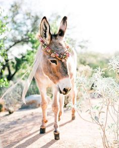 I Dream Of Arizona Wedding Inspiration Desert wedding ideas complete with a burro! Farm Animals, Animals And Pets, Funny Animals, Cute Animals, Wild Animals, Beautiful Creatures, Animals Beautiful, Cute Donkey, Arizona Wedding