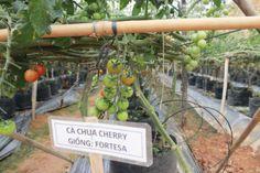 Mỗi loại cây đều được đánh dấu để theo dõi và chăm sóc