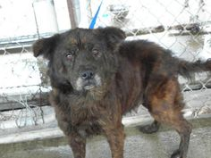 Jan 5/15 Brandy Spitz Mix • F • Med Monroe County Dog Pound 47137 Sr.26 Woodsfield, OH 43793 (740) 472-0300 House trained • Curr vacc  needs a good family to love & spend the rest of her life--warms up to people but takes a few days. lived in a house with children and she thinks it is her job to take care of them----after we obtained her now she thinks she needs to take care of us---hit by a car and has a scar--is a little stiff at times but has a few more years to live and deserves a good…