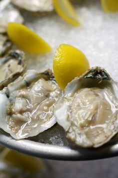Oysters at 508 Restaurant and bar