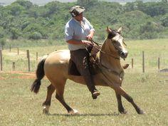 Visita a Cabaña da Reconquista nov 2010: Marcelo Cairoli Tellechea montando a BT Tiffany una hija del BT Delantero