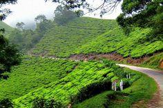 Munnar Valley in Kerala