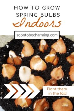 Plant them in the fall and enjoy them in the spring! Planting bulbs in containers is easier than you think and I will walk you through the process in 6 simple steps. You can have beautiful blooms inside, while there is snow on the ground outside! Spring Bulbs, Spring Blooms, Spring Flowers, Fall Plants, Planting Bulbs, Bulb Flowers, Landscaping Tips, Container Gardening, Meal Planning