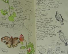 A nature journal with traditional subject entries.