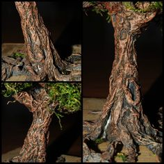 Raices del árbol