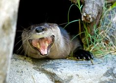 """""""I know it's not even Thanksgiving yet but I LOVE ALL THE CHRISTMAS MUSIC THAT'S OUT ALREADY!!"""" 