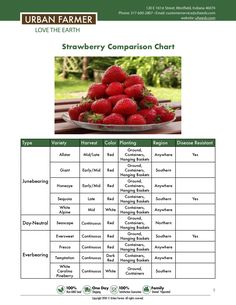 How to grow strawberries from sowing to harvest. Strawberry seed growing guide for all gardeners. Sowing, watering, location, fertilizing and harvest. Strawberry Varieties, Strawberry Seed, Strawberry Plants, Types Of Strawberries, Everbearing Strawberries, Garden Plants Vegetable, Urban Farmer, Vertical Garden Diy, Victory Garden