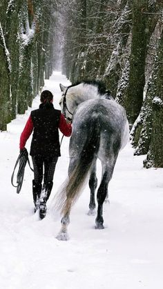 Winter Ride, beautiful white and black horse strolling through the snowy forest.