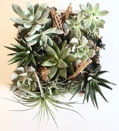 The Succulent Garden - a succulent garden made in a white ceramic square pot Succulents Garden, White Ceramics, Lush, Flower Arrangements, Christmas Wreaths, Bouquet, Holiday Decor, Flowers, Floral Arrangements