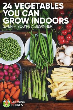 Indoor Vegetable Gardening 24 Newbie-Friendly Vegetables You Can Easily Grow Indoors via - Want to learn growing vegetable indoors? Here's a complete list of 24 vegetables to grow indoors to supply you with healthy fresh veggies. Indoor Vegetable Gardening, Home Vegetable Garden, Hydroponic Gardening, Gardening Tips, Organic Gardening, Indoor Farming, Hydroponics, Beginners Gardening, Gardening Zones