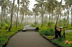 Kerala & the rain....awesome