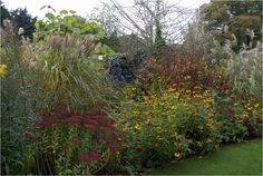 """Knoll Gardens, Wimborne: """"Vibrant reds of Persicaria  amplexicaulis """"Taurus"""" and Sedum """"Herbstfreude"""", and yellow Rudbeckia  fulgida """"Deamii"""", with more subtle hints of lilac Aster laevis """"Calliope"""", make this autumn planting as lively as any summer border.  Architectural grass, Miscanthus sinensis """"Malpartus"""", which blooms in early September, helps to give structure."""""""