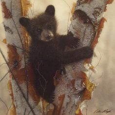 "Bear Cub in Birch Tree Image Size 12"" x 12"""